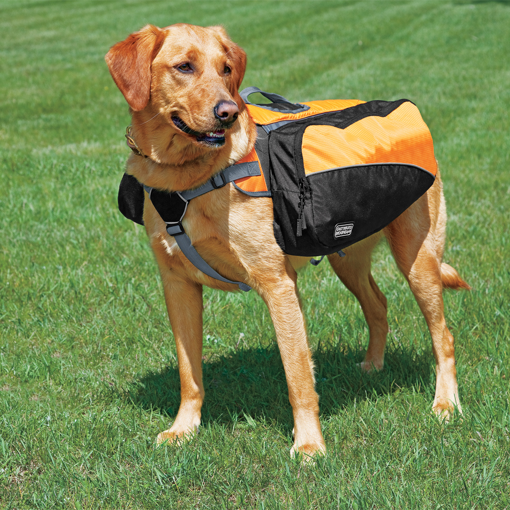 Popular Dog Backpacks | Backpack Outpost