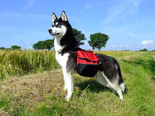 dog-backpack[1]